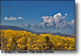 Grand Tetons in Autumn from Bridger Teton National Forest, golden aspen, red aspen