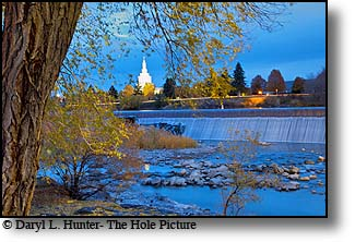 Idaho Falls, Idaho, Temple, golden cottonwoods, autumn