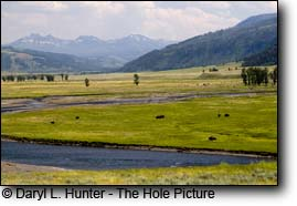 Yellowstone's Lamar Valley