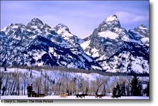 FranK Teasley's dogteam in front of the Grand Tetons