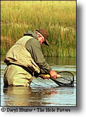 madison river fly-fisherman netting fish