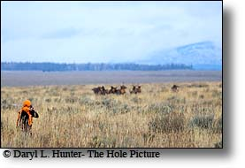 elk Hunter, Jackson Hole wyoming