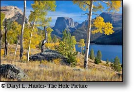 The Wind River Mountains, Fall Colors, Golden Aspen, Pinedale, Wyoming