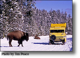 A snowcoach tour is an awesome way to view wildlife in Yellowstone