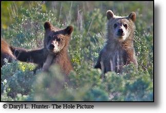 Grizzly Bear Photos